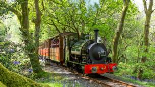 Train in woods