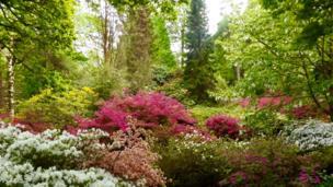 Clyne Gardens, Swansea