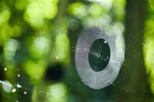 La tela de una araña iluminada por un rayo de sol.