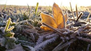 A frosty morning in a field near Presteigne, Powys, taken by Laura Shepherd