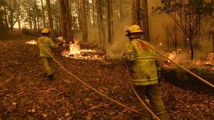 Bombeiros combatem o incêndio em uma floresta em Tomerong, ao sul de Sydney.