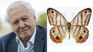 Attenborough and