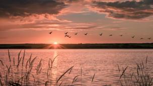 Geese take off over the sunset at Llyn Coron on Anglesey by David Griffiths