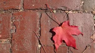 Leaf and bricks