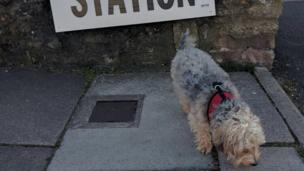 Bella the Bichon/Yorkie in Porthcawl