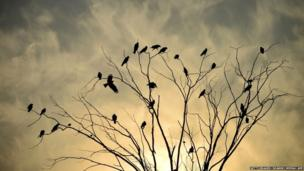 8. Birds sit on tree branches during sunset in Jalandhar on January 10, 2018