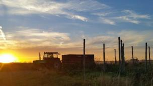 Sunrise as the farmer gets to work near Watchfield, by our BBC Weather Watcher 'Ivan Denisovich'.