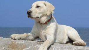 Rescue dog Buddie on the beach at Llanddulas, near Abergele.