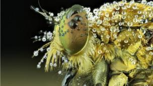 นายรูมบอกกับบีบีซีว่า เขาตามถ่ายภาพแมลงเพื่อจะจับภาพการแสดงออกทางสีหน้าของมัน บางวันถ่ายภาพหลายสิบรูปแต่มีรูปที่สวยเข้าตาแค่รูปเดียว บางวันถ่ายภาพออกมาไม่ได้ดั่งใจเลยก็มี