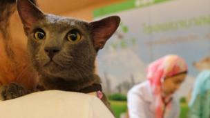 แมวที่ร่วมงานประกวดแมวในไทย
