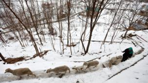 कश्मीर में बर्फ़बारी