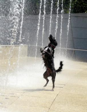 Dog in a fountain