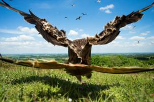 A red kite takes off directly in front of the camera