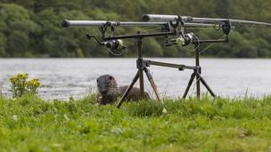 Otter with fishing lines