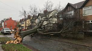 Tree brought down in Aigburth, Liverpool