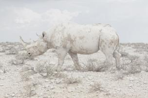 A rhino blending in to the landscape