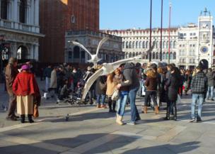 Palomas en la Plaza de San Marco, Venecia