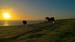 Two horses on the Wales Coast Path