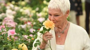 Dame Judi Dench holds a rose