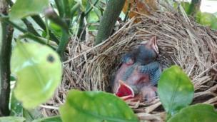 Pichones en un nido
