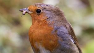 A robin in a garden in Bicester