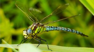 A dragonfly at Newport wetlands