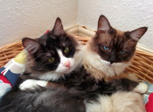 Two cats hug