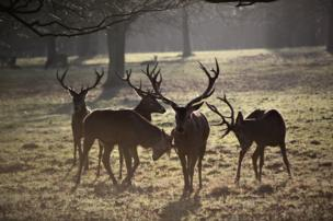 Stags in a park