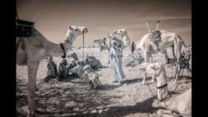 Nomadic men with camels