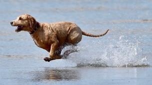 كلب يركض على شاطئ مفتوح