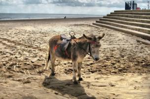 Un burro en la playa.