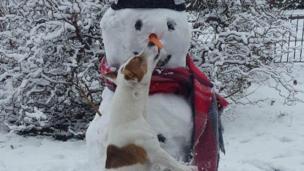 Dog biting a snowman's carrot nose