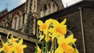 Ashley Williams photographed these daffodils at St Mary's Church, Swansea