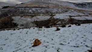 Jelena Griffiths snapped her golden retriever George in the snow in Treorchy, Rhondda Cynon Taff.