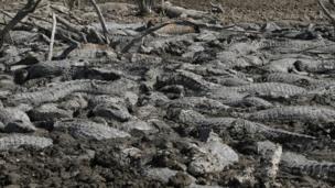प्राग्वे में पिक्लोमेयो नदी के आस-पास पड़ा सूखा