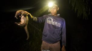 Một kẻ săn trộm tê tê ở Kalimantan, Indonesia