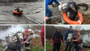 Rescuers saved a donkey named Mike in County Kerry