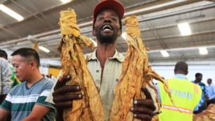 Tobacco farmer Godfrey Chirau holds a sample of his crop during the opening of the Tobacco selling season in Harare 30 March 2016