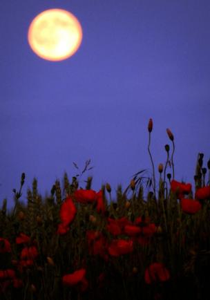 Strawberry moon, taken from Long Stratton, near Norwich, UK. Credit: Gerhard Geldenhuys