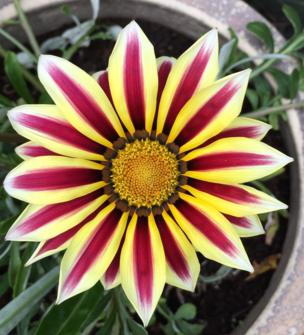 Petals on a flower