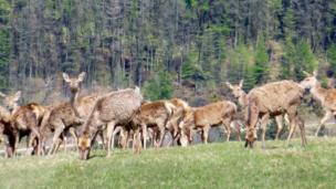 Deer in Margam Park