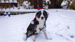Lilly the dog wearing a Santa hat in the snow