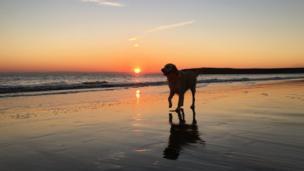 A dog walking on Barry Island beach