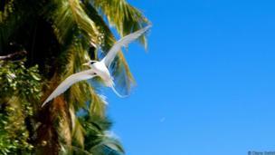 Quần đảo Chagos là nơi rất tuyệt để ngắm chim