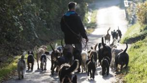 Dogs wey dey stroll