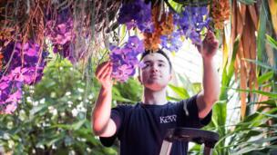 Trabajador de Kew cuidando las orquídeas del festival