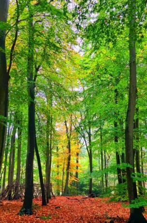 Bagley Wood