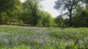 Lee Louie Carlton Williams snapped this sea of bluebells at Aberbargoed Grasslands Nature Reserve in Caerphilly county