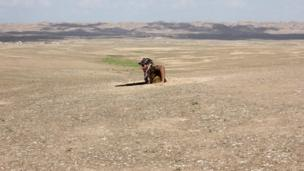 شخص مسلح يخرج من حفرة