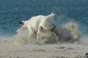 Un perro juega en la arena en Namibia